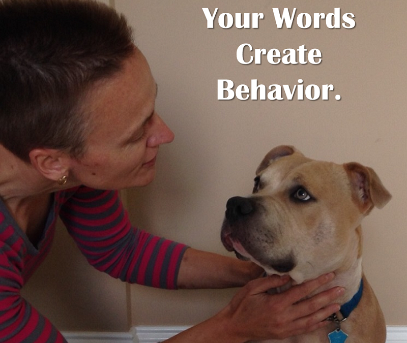 What words are you speaking to your dog?